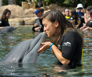 girl, dolphin, and photography image