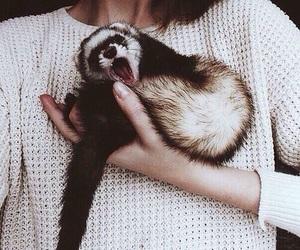 animal, ferret, and pet image
