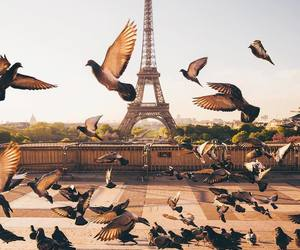 birds, france, and paris image
