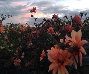 flowers, sky, and alternative image