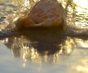 beach, shell, and ocean image