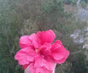 pink and flor rosa image