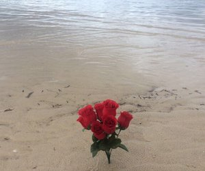 rose, aesthetic, and beach image