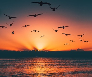 beautiful, bird, and sunset image