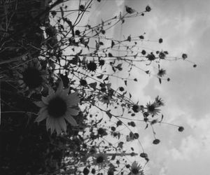 black, black and white, and nature image