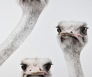 animal, ostrich, and funny image