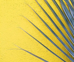 yellow and yellow wall image
