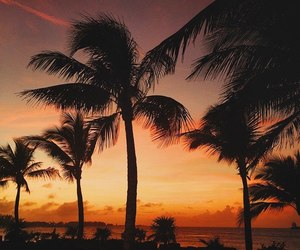 palm trees, sunset, and travel image