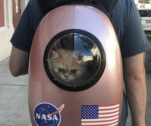 cat, nasa, and cute image
