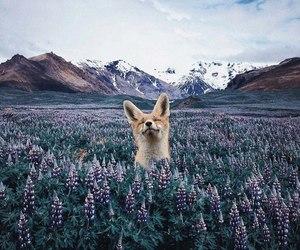 fox, animal, and mountains image