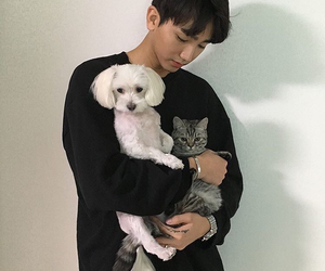 asian, cat, and dog image