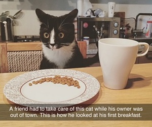 cat, funny, and haha image