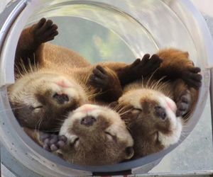 baby and otters image