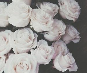 природа, цветы, and потрясающе image