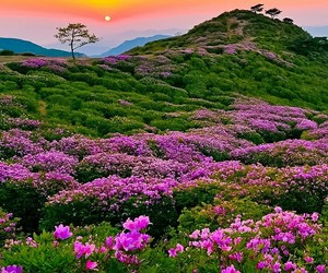flowers, horizon, and sun image