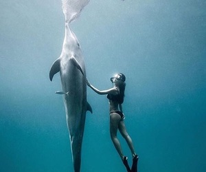 dolphin, animal, and beautiful image