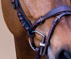bit, bridle, and horse image