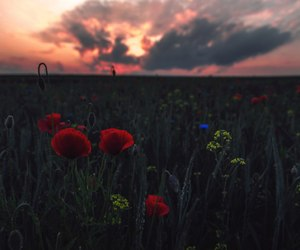 flower, landscapes, and world image