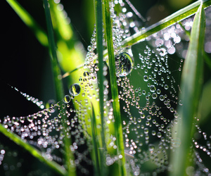 meadow, water drops, and wiese image