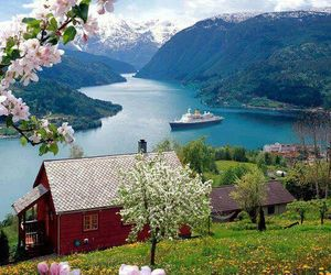 norway, mountains, and flowers image
