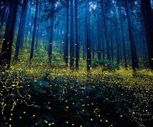 forest and fireflies image