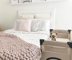 bedroom, dog, and puppy image