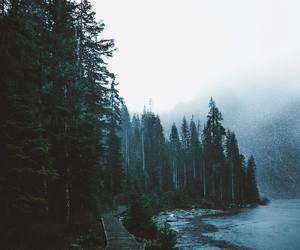 adventure, fog, and forest image