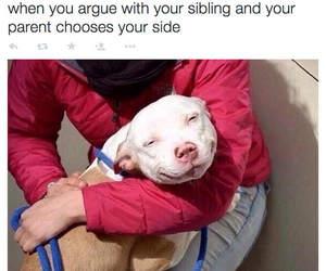 funny, dog, and grandma image