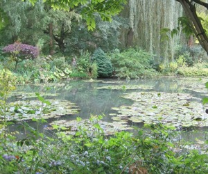 garden, green, and lily pads image