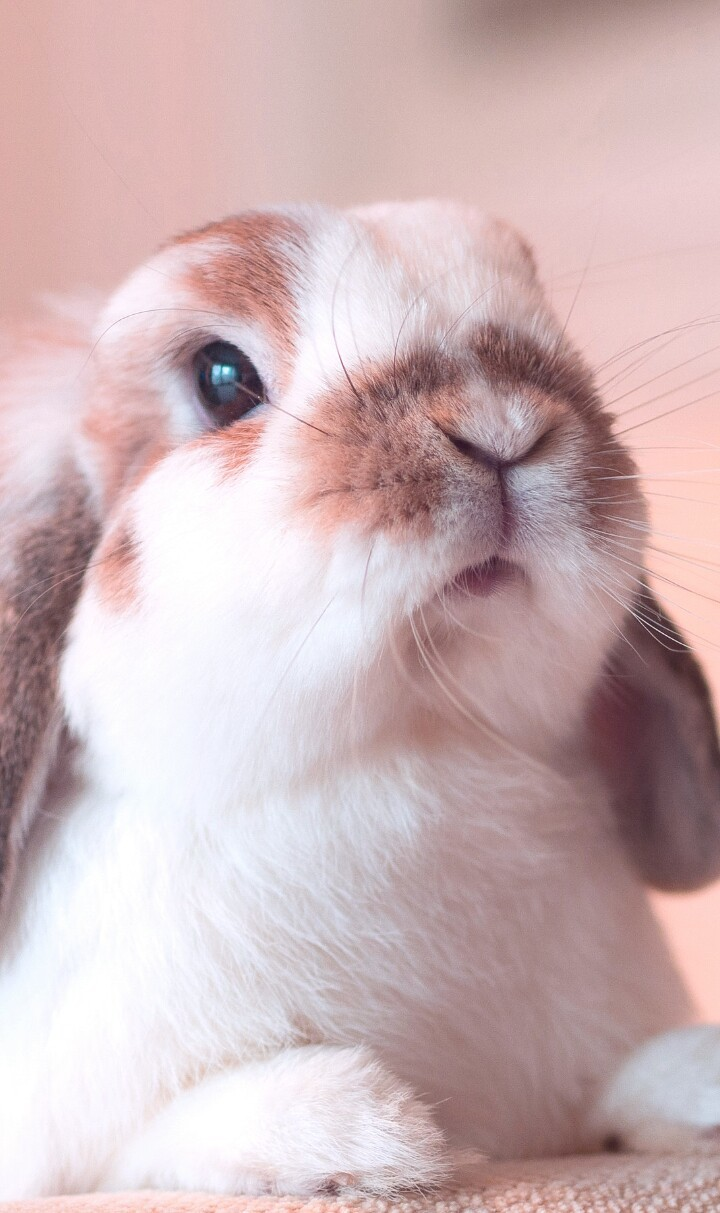 Animals Baby Background Beautiful Beauty Bunny Colorful Cute Animals Cute Baby Cutie Design Fashion Fashionable Inspiration Iphone Kawaii Luxury Nature Nose Pastel Pink Pretty Rabbit Still Life Wallpaper Wallpapers We Heart It