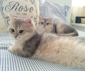 bed, cat, and cats image
