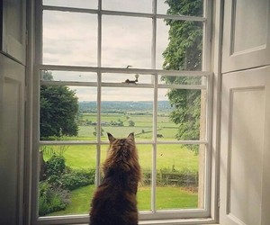 cat, like, and view image