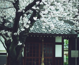 japan and traditional japanese image