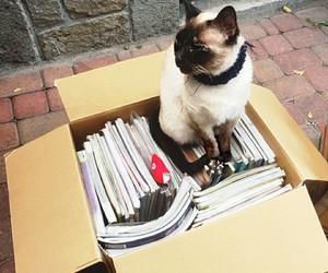 books, box, and cat image