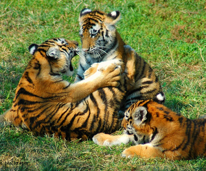 black, cub, and cubs image