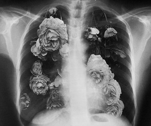 flowers, black and white, and lungs image