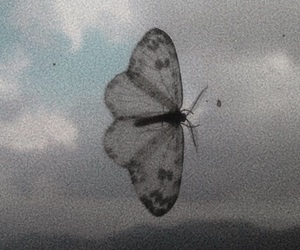 butterfly, aesthetic, and beautiful image