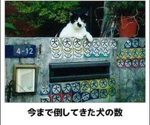 猫 image