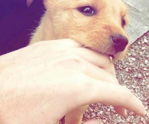 animals, bite, and cute image