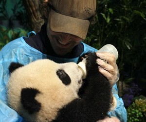 lee pace and panda image