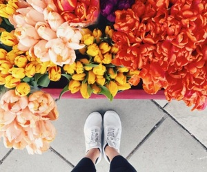 flowers, red, and inspiration image