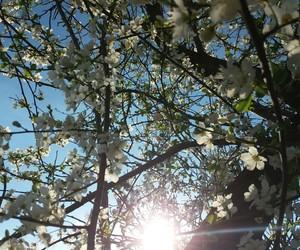 flower, sunshine, and tree image