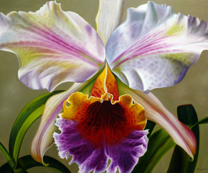 beauty, orchids, and photography image