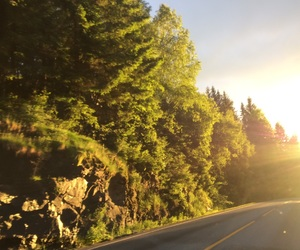 driving, green, and nature image