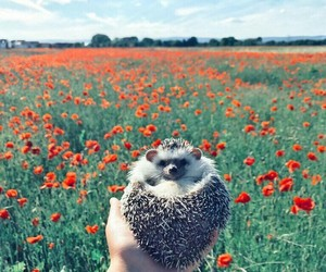 flowers and hedgehog image