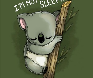 dormir, Koala, and funny pictures image