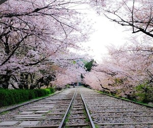 cherryblossom, japan, and nihon image