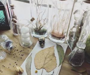 alchemist, botany, and druid image