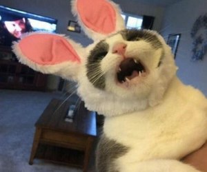 cat, animal, and bunny image