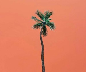 orange, palm tree, and hawaii image